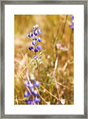Wild In The Field II Framed Print by Jon Glaser