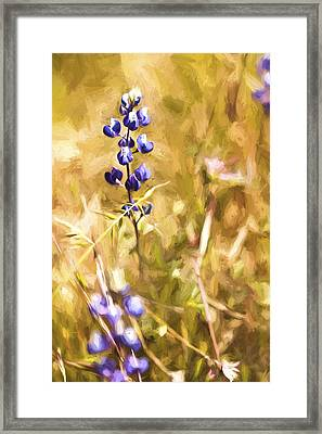 Wild In The Fieldiii Framed Print by Jon Glaser