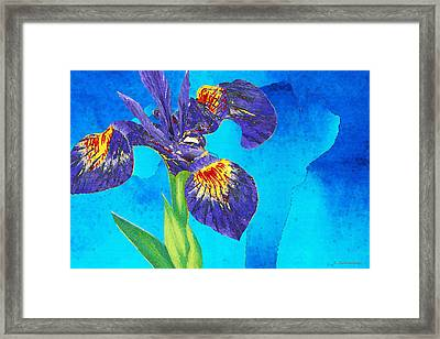 Wild Iris Art By Sharon Cummings Framed Print by Sharon Cummings