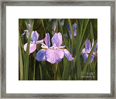 Framed Print featuring the painting Wild Iris by Laurie Rohner