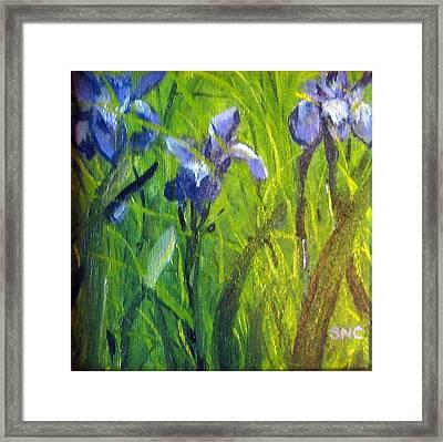Wild Iris Framed Print by Susan Coffin