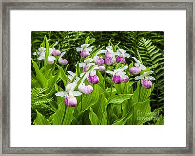 Wild Lady Slipper Flowers Framed Print by Edward Fielding
