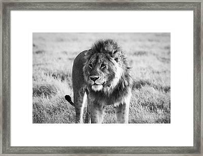 Wild Life Framed Print by Alessandro Giorgi Art Photography