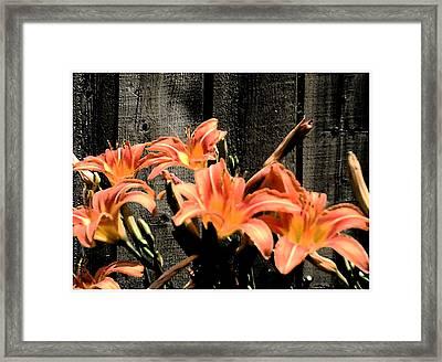 Wild Lily's Framed Print by Richard N Watkins