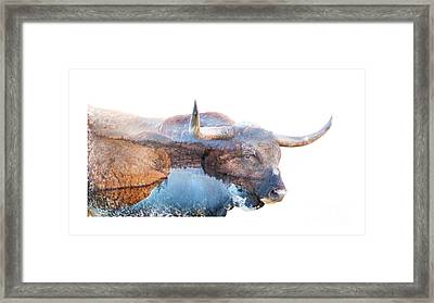 Wild Longhorn Bull And Lake Double Exposure Framed Print