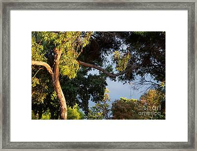 Wild Morning Light Before The Rain Framed Print by Marie Viant