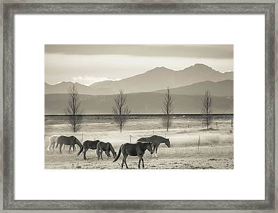 Wild Mountain Horses - Black And White Framed Print by Gregory Ballos