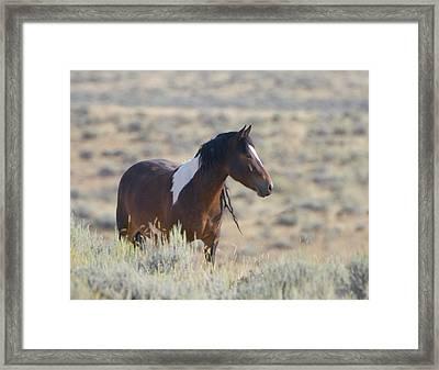 Wild Mustang 1 Framed Print