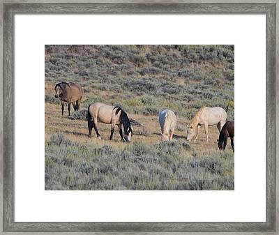 Wild Mustang 11 Framed Print
