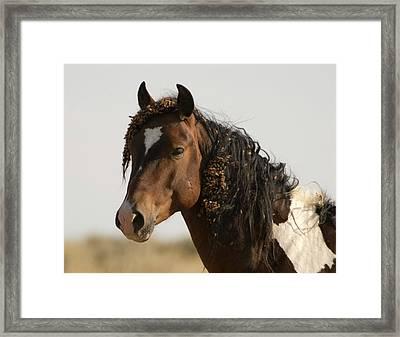 Wild Mustang 12 Framed Print