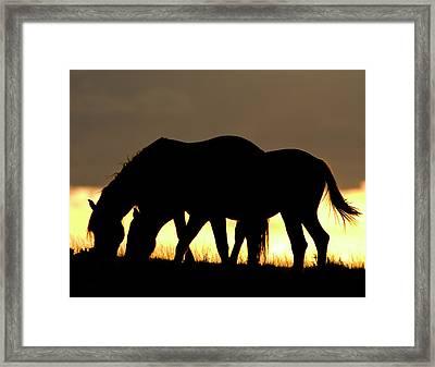 Wild Mustang 13 Framed Print