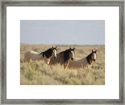 Wild Mustang 2 Framed Print