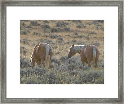 Wild Mustang 3 Framed Print