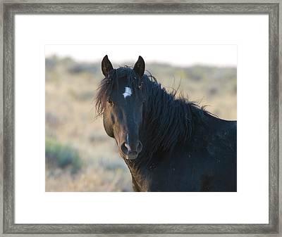 Wild Mustang 4 Framed Print