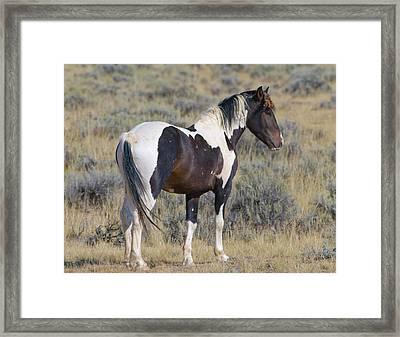 Wild Mustang 6 Framed Print