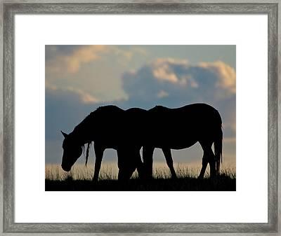 Wild Mustang 8 Framed Print