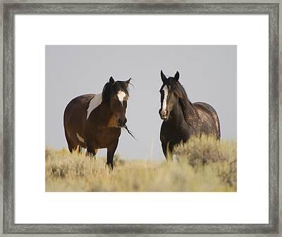 Wild Mustang 9 Framed Print