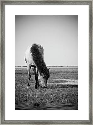 Wild Mustang Framed Print by Bob Decker