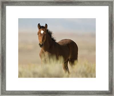 Wild Mustang Colt Framed Print