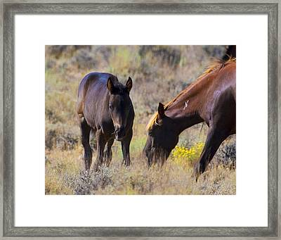 Wild Mustang Foal And Mare Framed Print