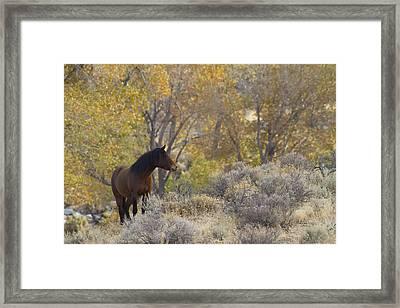 Wild Mustang Horse Framed Print