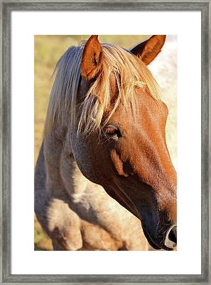 Wild Mustang Framed Print by Kate Purdy