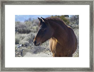 Wild Mustang Mare Framed Print