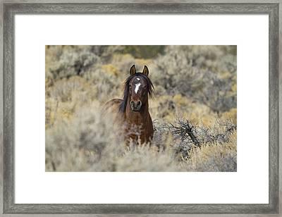 Wild Mustang Stallion Framed Print