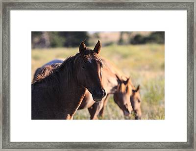 Framed Print featuring the photograph Wild Mustangs by Kate Purdy