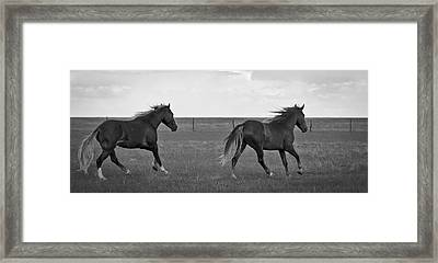 Wild Mustangs Of New Mexico 46 Framed Print