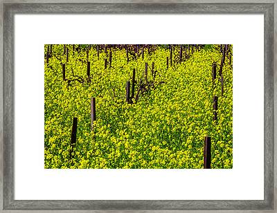 Wild Mustard Grass Framed Print by Garry Gay