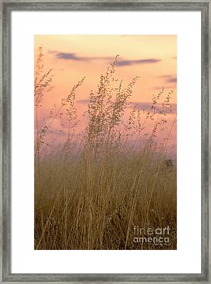 Framed Print featuring the photograph Wild Oats by Linda Lees