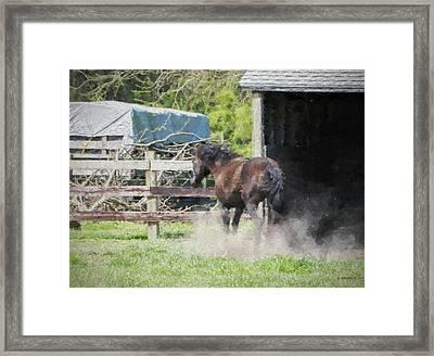 Wild One - Paint Fx Framed Print