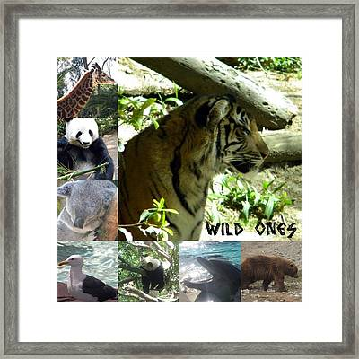 Framed Print featuring the photograph Wild Ones by Amanda Eberly-Kudamik