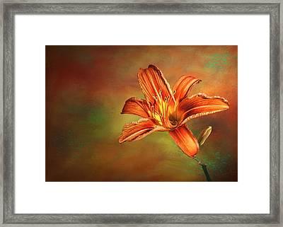 Wild Orange Lily Framed Print