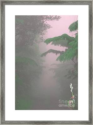 Wild Orchid In Volcano Mist Framed Print by Uldra Patty Johnson
