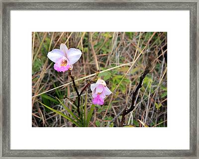 Wild Orchid Framed Print by Mary Haber