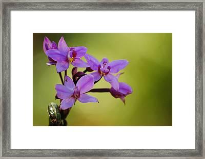 Wild Orchids 2 Framed Print