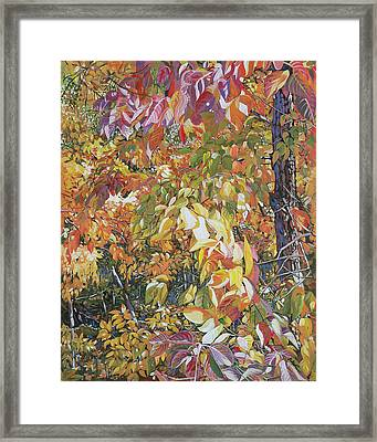 Wild Persimmon 4 Framed Print by Nadi Spencer