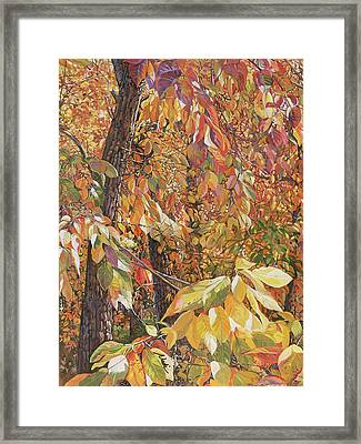 Wild Persimmon Trees Framed Print by Nadi Spencer