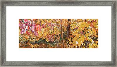 Wild Persimmons Long Framed Print by Nadi Spencer