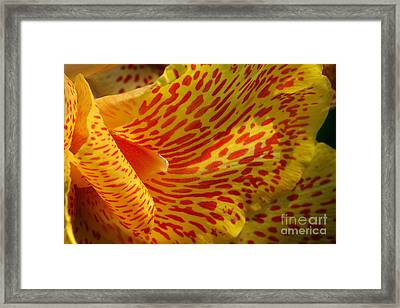 Wild Petals Framed Print by Jeannie Burleson