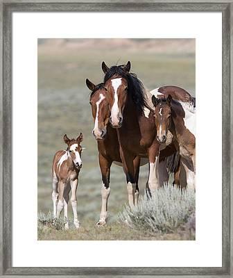 Wild Pinto Family Framed Print by Carol Walker