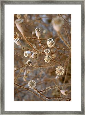 Wild Plants Framed Print
