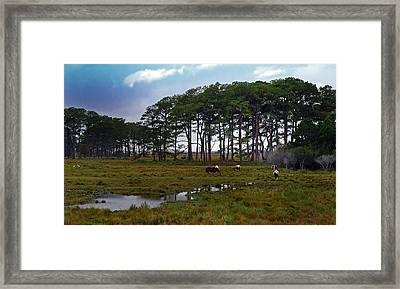 Wild Ponies Of Assateague Framed Print by Lori Tambakis