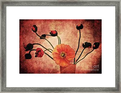 Wild Poppies Framed Print by Angela Doelling AD DESIGN Photo and PhotoArt