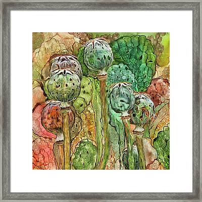Wild Poppy Pods Framed Print by Carol Cavalaris