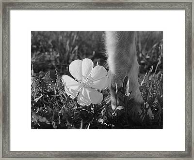 Wild Primrose With Dog's Foot Framed Print