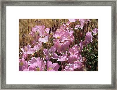 Wild Primrose Framed Print by Donna Kennedy