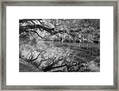 Wild Reflection Framed Print by Liesl Walsh
